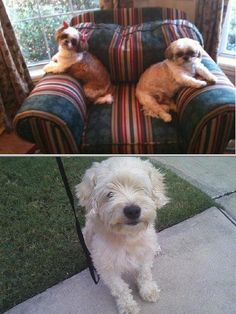 Feel secured to leave your pets to the professional team of Guardian Pet Sitters. They have been in the business for 18 years providing in-home pet sitting services. Visit their website to know more.