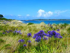 Tresco - Isles of Scilly. July 2012.