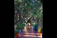 The garden of Bergé's Villa Oasis, adjacent to Majorelle in Marrakech Marrakech, Build A Greenhouse, Most Beautiful Gardens, Green Party, Gardening For Beginners, Party Photos, Shade Garden, Days Out, Landscape Design
