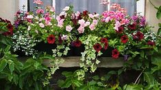 Potager Garden Petunias in window box - love these colors for our back by rose bushes - If you're looking to create a container garden in a sunny spot, use our list of the best flowering container garden plants for full sun locations. Full Sun Container Plants, Full Sun Plants, Sun Loving Plants, Container Flowers, Container Gardening, Succulent Containers, Evergreen Container, Plants Sunny, Window Box Plants