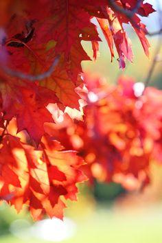 The colour of autumn #autumn #beauty