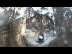 WOLF-SONG - YouTube