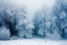 As a true nature enthusiast, I love strolling through the woods taking pictures of different forest atmospheres. Therefore, I'd love to invite you to share your beautiful forest photography with me and other readers. Winter Szenen, Winter Love, Winter Magic, Winter White, Winter Trees, Snowy Trees, Snow White, Winter Landscape, Landscape Photos