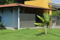 Jardim Botânico Pergola, Outdoor Structures, Outdoor Decor, Plants, Home Decor, Walkway, Pictures, Homemade Home Decor, Flora