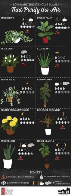Find the best, easy-to-care-for house plants with the Top Ten House Plants Guide! This list shows how much water and sunlight each plant needs! Via: https://gardenersadvice.info/category/house-plants/ #easyhouseplants #besthouseplants #houseplantscare