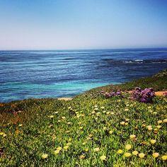 Flores y mar #lajolla #sopretty #idontcarehowsunburniam