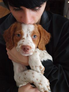 Frosty ~ Brittany Spaniel Pup ~ Classic Look