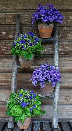 Purple flowers in Pots, so pretty