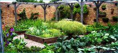 Jamie Olivers garden
