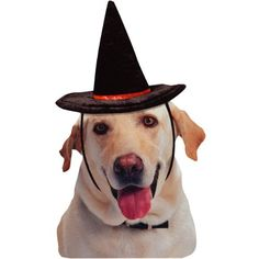 HALLOWEEN FELT WITCH HAT - MEDIUM - http://www.thepuppy.org/halloween-felt-witch-hat-medium/