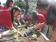 Teaching Gardens / American Heart Association School Garden project. Children are learning better nutrition, life science and the many joys and rewards of gardening in our school gardens.