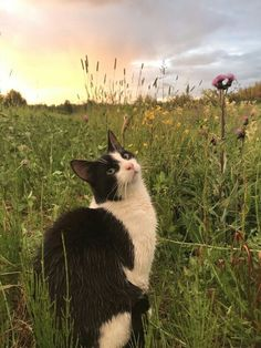 Uploaded by Find images and videos about aesthetic, nature and flowers on We Heart It - the app to get lost in what you love. Animals And Pets, Baby Animals, Cute Animals, Cute Creatures, Beautiful Creatures, Crazy Cat Lady, Crazy Cats, Pretty Cats, Cute Cats