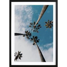 Wallified - Palms In The Sky Poster Sky, Celestial, Palms, Outdoor, Prints, Products, Paper, Heaven, Outdoors