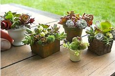 Mini Succulent Gardens.  Janit@ Two Green Thumbs