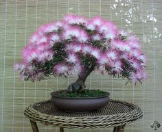 Flowering and fruitbearing Bonsai trees - Bonsai Empire