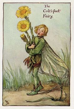 The COLT'S FOOT Fairy ~ Cicely Mary Barker ~