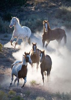 Krause Photographs - Al Krause Photography Horses And Dogs, Animals And Pets, Cute Animals, Beautiful Arabian Horses, Majestic Horse, Art Beauté, Cowboy Horse, Wild Mustangs, Horse Pictures