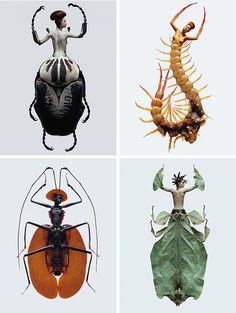 laurent-seroussi: insect people