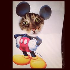 mickey mouse cat