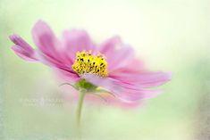 Macro flower photography: Jacky Parker