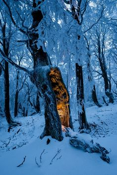 Blue winter forest with single tree with mysterious glow inside. Blue winter for , Winter Schnee, Winter Wallpaper, Christmas Wallpaper, Winter Magic, Winter Fairy, Photos Voyages, Winter Beauty, Beautiful World, Nature Photography