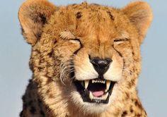 Ideas Pet Rabbit Hilarious For 2019 Cute Baby Animals, Funny Animals, Wild Animals, Baby Tigers, Tiger Cubs, Tiger Tiger, Bengal Tiger, Hedgehog Pet, Pet Pigs