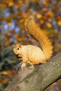 Squirrel in sunny autumn