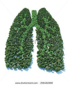 Стоковые фотографии и изображения Lungs | Shutterstock