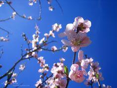 Vind vandaag de balans eens tussen je linker en je rechter hersenhelften.  Gewoon door naast veel te denken in de vorm van oplossingen en aan alles wat je nog moet doen, ook creatief te zijn... balans... het woord voor de lente