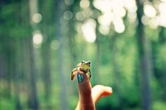 Frog Prince in the Forest Photograph by ieatstars on Etsy, $65.00