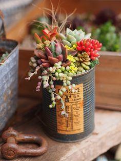 Succulent Gardening, Garden Planters, Planting Succulents, Container Gardening, Potager Bio, Terrarium Plants, Miniature Plants, Flower Pots, Flowers