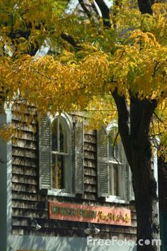 Google Image Result for http://www.freefoto.com/images/19/01/19_01_74---Autumn-color-in-New-England_web.jpg