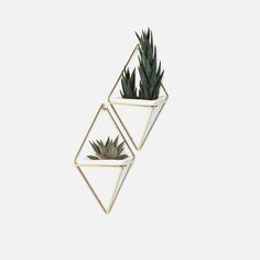 Midcentury Modern Apartment Umbra Trigg Hanging Planter Vase & Geometric Wall Decor Container – Great For Succulent Plants, Air Plant, Mini Cactus, Faux Plants and More, White Ceramic/Brass (Set of 3 Faux Succulents, Faux Plants, Small Plants, Succulent Plants, Indoor Succulents, Succulent Containers, Mini Plants, Indoor Plants, Deco Design Pas Cher