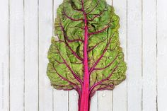 Fresh Organic Rainbow Chard by Suzanne Clements