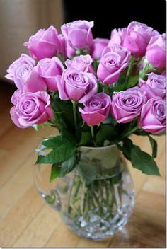 February Flowers! Romantic Flowers, Purple Roses, Birthday, Plants, Blog, February, Amazing, Birthdays, Purple Rose