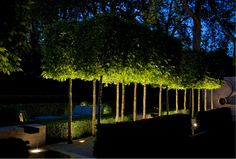 Dramatic lighting Luciano Giubbilei Chelsea flower show