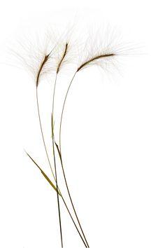 grass stems (mary jo hoffman)