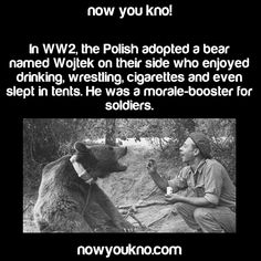 ﴾͡๏̯͡๏﴿ Its a Fact Wow Facts, Wtf Fun Facts, Funny Facts, Awesome Facts, Random Facts, Fact Of The Day, Mind Blowing Facts, Wojtek Bear, You Dont Say