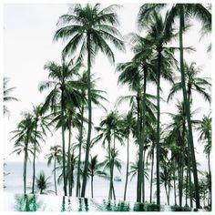Tropical Island Adventures :: Escape to a Beach Paradise :: Soak in the Sun :: Palms + Ocean Air :: Discover more Island Life Inspiration Koh Samui, Samui Thailand, Belle Photo, Summer Vibes, Palm Trees, Travel Inspiration, Life Inspiration, The Good Place, Destinations
