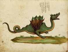 "thephysicalisanillusion: ""wallacegardens: Year of the Dragon. Illustration by Ulisse Aldrovandi, from his opus magnus Historia serpentum et draconum "" Dragon Medieval, Medieval Art, Illustrations Harry Potter, Dragons, Dragon Illustration, Year Of The Dragon, Illuminated Manuscript, Mythical Creatures, Tarot"