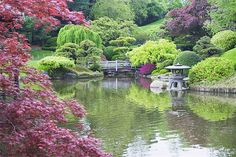 Brooklyn Botanic Garden - Prospect Heights, Brooklyn - A highlight of these 52 acres is the Japanese Garden, where cherry trees bloom every spring. Hunting for waterfalls and turtle-watching on the pond are stellar ways to spend an afternoon. Brooklyn Botanical Garden, Botanical Gardens, Shade Garden, Garden Plants, Bog Garden, Japan Garden, Gardening Vegetables, New York City, Japanese Garden Design