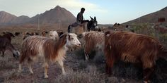 An Unprecedented Look Inside Iran From A Getty Photographer - Business Insider