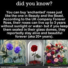 YES YES YES! #beautyandthebeast #movies #foreverrose #flowers ➡Download our free App: [LINK IN BIO]