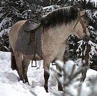 Drei Haselnüsse für Aschenbrödel - Die Pferde