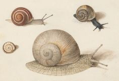 Joris Hoefnagel - Animalia Qvadrvpedia et Reptilia (Terra): Plate LXI - c. 1575-1580 - via NGA