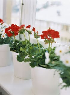 Interior Design | Home Decor | Furniture & Furnishings | The Home Look: Top 15 Indoor Plants