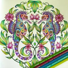 Thanks for my new coloring book, Joanna Basford, Johanna Basford Coloring Book, Caran D'ache, Polychromos, Coloured Pencils, Color Pencil Art, Coloring Book Pages, Photo Instagram, Adult Coloring