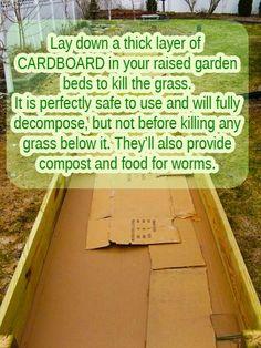 #Cardboard boxes for Raised #Garden Beds #tips #gardening #grass