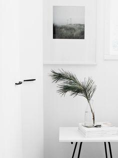 big leaf & white space, minimal. Un uso relativo del centro floral   tránsito inicial