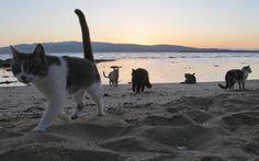 beach kitties